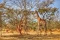 Sumu wildlife park 5.jpg