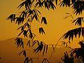 Sunset in Surkhet 4.jpg