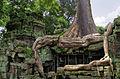 Ta Prohm Angkor giant tree.jpg