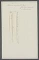 Taenia crassicollis - - Print - Iconographia Zoologica - Special Collections University of Amsterdam - UBAINV0274 105 20 0006.tif
