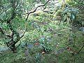 Taima-dera Temple - Sainan-in - Garden.jpg