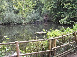 Klever Reichswald - The Reichswald near Kranenburg.