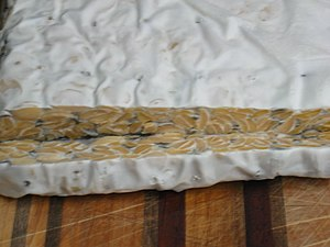 Rhizopus oligosporus - Rhizopus oligosporus on homemade tempeh