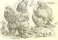 The Asiatics; Brahmas, Cochins and Langshans, all varieties, their origin; (1904) (14774142994).jpg