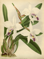 The Orchid Album-01-0134-0044.png