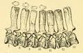 The Osteology of the Reptiles-124 iujhgjhgb iujhgbnjhgb.png
