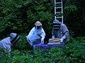 The beehive is opened.JPG