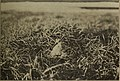 The home life of the Baird Sandpiper. - with map and five photos (1917) (14748310322).jpg