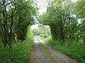 The lane to Odd House - geograph.org.uk - 166347.jpg