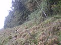 The square plantation - geograph.org.uk - 1188955.jpg