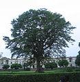 Theen Murthi Bhavan - Delhi-tree standing before.jpg