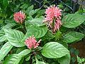 Three flower inflorescence.jpg