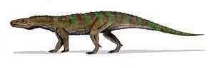 Ticinosuchus - Restoration.