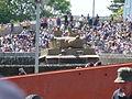 Tiger 131 (3665617837).jpg