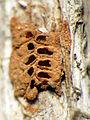 Tiny Clay Nest (16414842725).jpg