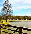 Towne Lake Park,.jpg