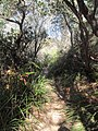 Trail in the Royal National Park.jpg