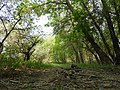 Trail in the woods.jpg