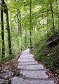 Trail to Savica Fall 4.jpg