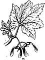 Trattato completo di agricoltura I fig073.jpg