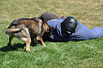 Travis Military Working Dog 150326-F-OH435-061.jpg