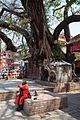 Tree Shrine & Holy Man (5198439120).jpg