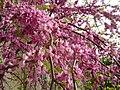 Tree flower dsc00980.jpg