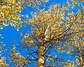 Trees near Summer Lake, Oregon (13992696468) (cropped).jpg