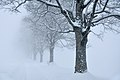 Trees snow fog sk.jpg