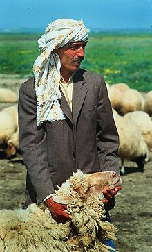 Mouton d'Europe dans MOUTON 220px-Tunisian_man_with_sheep