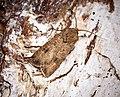 Turnip Moth (30450285368).jpg
