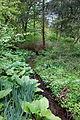 Tyler Arboretum - DSC01782.JPG