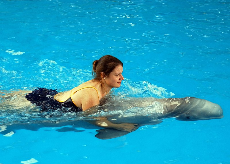 File:US Navy 041216-N-8774S-076 A Sailor assigned to the aircraft carrier USS Harry S. Truman (CVN 75), swims with a dolphin during a port visit to Bahrain.jpg