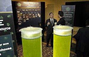 Algae for Your Fuel Tank