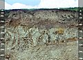 Udic Argiustoll (fine-silty, mixed, active, mesic).jpg