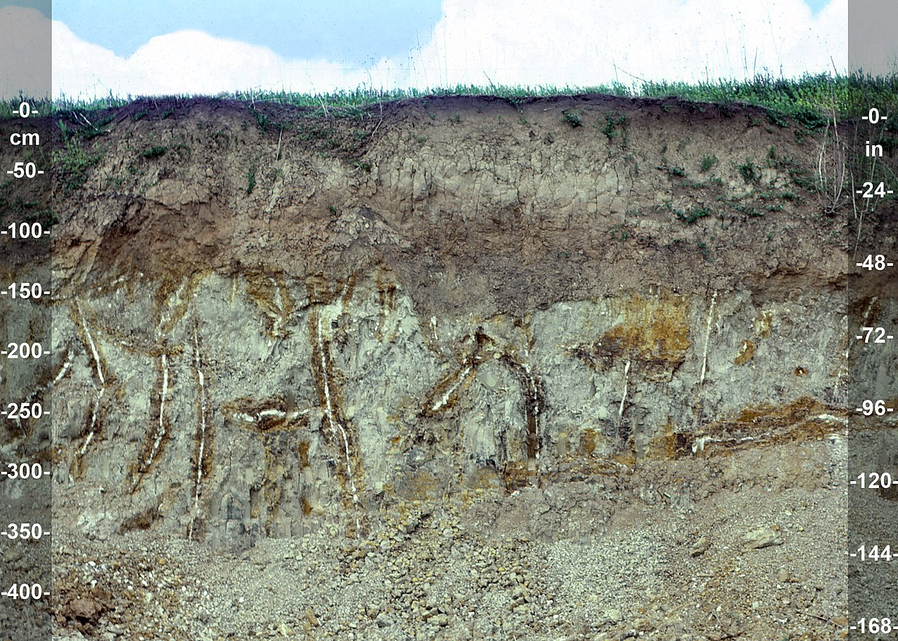 File udic argiustoll fine silty mixed active mesic for Uses of soil wikipedia