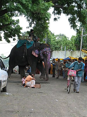 An elephant outside the Mahakaleshawar temple in Ujjain