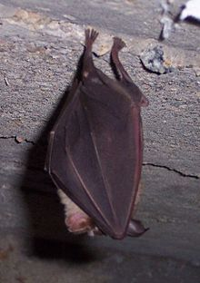 Unknown Bat 2.jpg