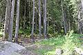 Vahrn-Landschaftsschutzgebiet Vahrn-Schalders (LSG 1 05-2015).jpg