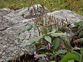 Valley of flowers National Park 16.JPG