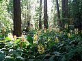 Vegetación en Parque Mancebo.jpg