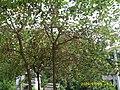 Višnje kod Mije - panoramio.jpg