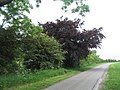 Viking Way turning at the copper beech - geograph.org.uk - 848993.jpg