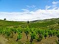 Villeneuve-les-Corbières Vignes.jpg