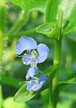 Violet Flower Small3.jpg