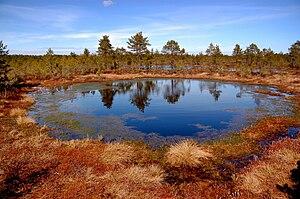 Lahemaa National Park - Image: Viru bog 0057