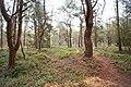 Wald in der niederländischen Provinz Friesland (47980136227).jpg