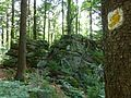 Waldlandschaft im Bayerischen Wald.jpg