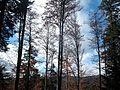 Wanderung im November - panoramio (40).jpg