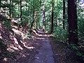 Wanderweg zum Kunstteich - panoramio.jpg